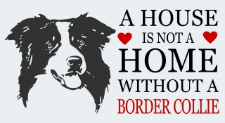 A HOUSE ...BORDER COLLIE